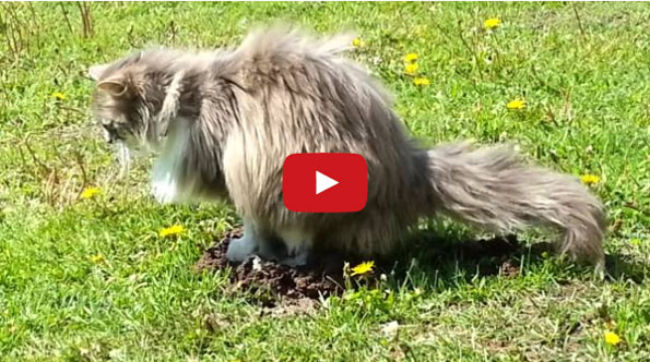 Just A Cat Peeing On A Mole's Head. That Is All.