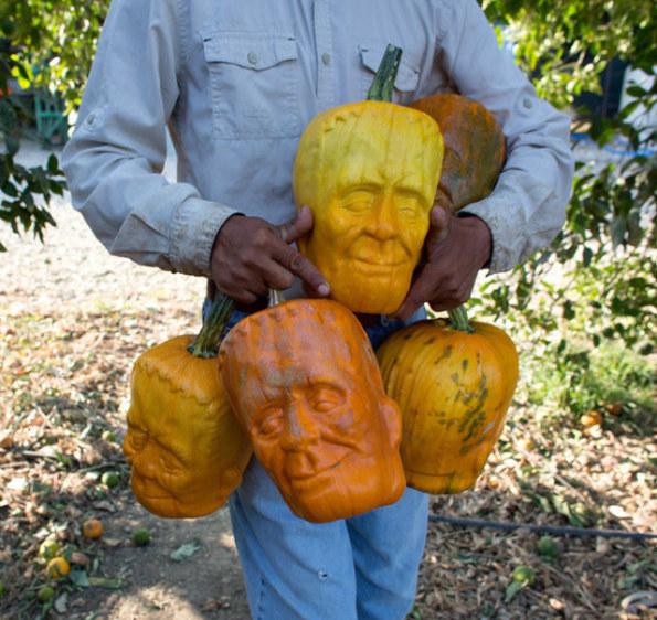This Farmer Has Created A Monster!: Frankenstein Pumpkins