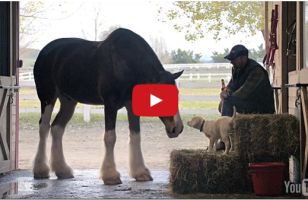 Check Out Budweiser's Sappy But Sweet Super Bowl Commercial