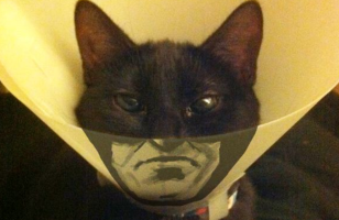 Na na na na na na na na Batcat! & More Incredible Links