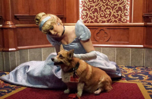 Aw! A Corgi Got To Meet All His Favorite Disney Characters
