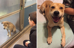 See These Sweet Rescue Pets Before And After Their Adoptions