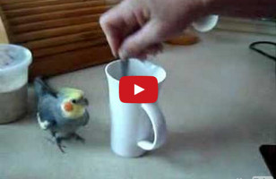 Little Bird Runs In Circles While Coffee's Being Prepared