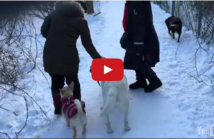 This Dog Thinks It's His Job To Walk The Wiener Dog