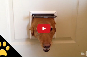 Hilarious Dogs Take Turns Peeking Through A Doggy Door