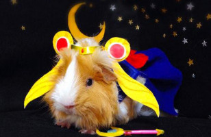 Cosplaying Guinea Pigs, Where Have You Been All My Life?