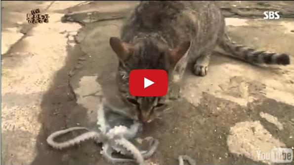 cat vs octopus who will win