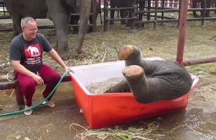 Nothing Is Cuter Than This Goofy Baby Elephant Taking A Bath