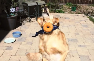 This Dog Is Really Really Bad At Catching Food In His Mouth