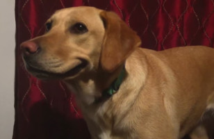 This Dog Smiling On Command Will Make YOU Smile
