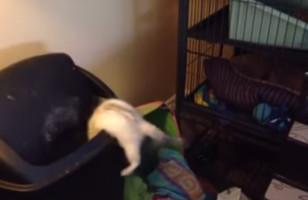 A Ferret Jumps Directly Into A Trashcan, LOLs Ensue