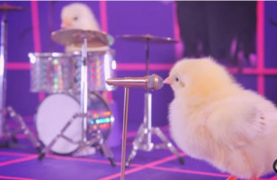 A Rock Band Made Up Of Baby Chicks Is Hardcore Cute