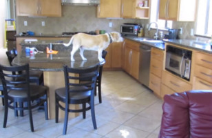 This Dog Will Do WHATEVER IT TAKES To Get Chicken Nuggets