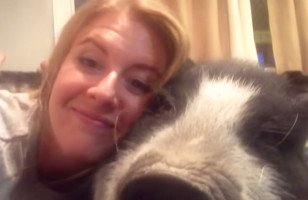 This Grumbly Pig Does NOT Like To Cuddle & It's Hilarious