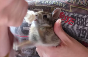 This Rabbit Rides An Invisible Bicycle While Drinking Milk