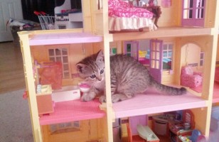 Cats Invade Doll Houses & More Incredible Links