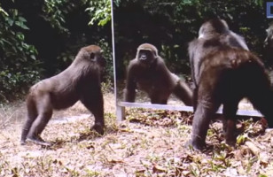Animals See Their Reflections For The First Time… Hilarious!