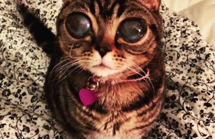 The Internet's New Favorite Kitty: Matilda, A Cat With Alien Eyes