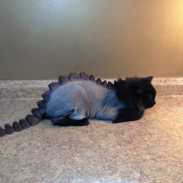 A Cat Gets The Dragon Cut, Is Clearly Not Thrilled About It