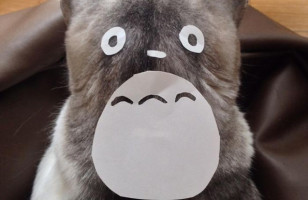 People Are Turning Their Cats Into Totoro & I Am Loving It!
