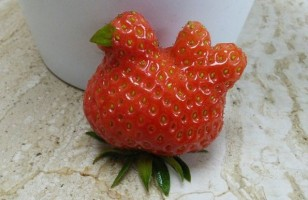 A Chicken-Shaped Strawberry & More Incredible Links