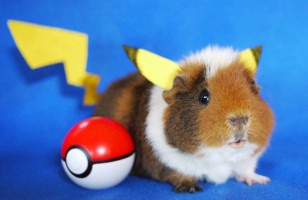 Fuzzberta The Cosplaying Guinea Pig Will Steal Your Heart