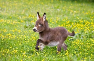 Nothing Is Cuter Than A Dwarf Donkey & More Incredible Links