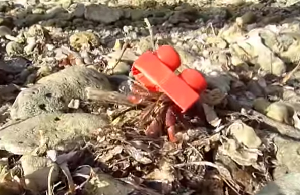 A Resourceful Hermit Crab Trades In His Shell For A LEGO Brick