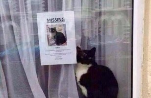 Missing Cat Found… Right Next To His Missing Sign Poster