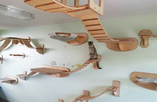 These Overhead Playgrounds For Cats Is A Kitty's Paradise