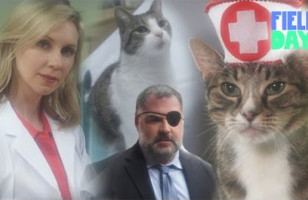 This Cat Soap Opera Is Better Than Any Soap Opera Ever