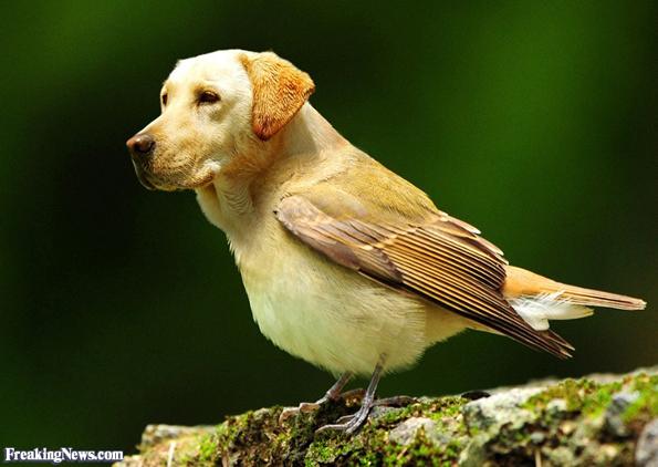 Dirds: Dog Heads, Bird Bodies