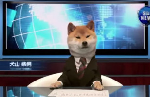 The News Is Actually Watchable With A Dog News Anchor