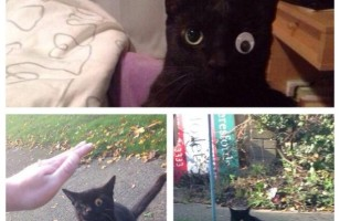 This Super Cute Kitty Lost An Eye So They Gave Him A Googly Eye