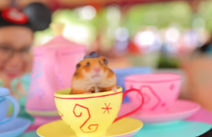 Tiny Hamster Goes To Disney World & Of Course It's Adorable!