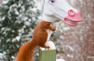 The Unicorn Head Squirrel Feeder Exists & It Is Absolutely Glorious