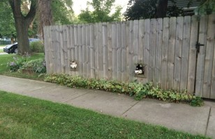 Someone Built A Dog Fence So Their Pups Can See The World