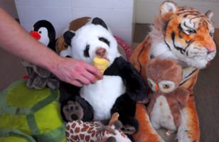 Watch This Stuffed Panda Bear Devour An Ice Cream Cone