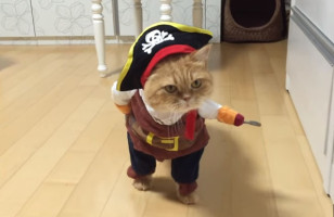 Arr Me Meowties!: Check Out This Cat Dressed As Jack Sparrow