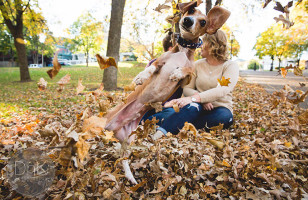 A Jealous Dog Photobombs Engagement Photos, Is Hilarious
