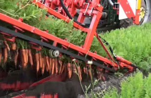 This Carrot Picking Machine Is Insanely Mesmerizing