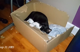 Watch This Cat Destroy A Box And Fear For Boxes Everywhere