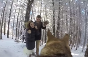 A Couple Had Their Dog With A GoPro Capture Their Wedding