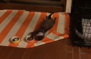 This Otter Eating While Relaxing On His Back Is All Of Us