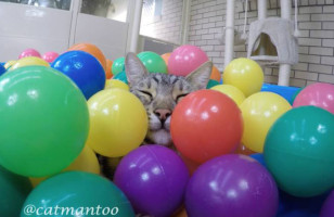 A Cat Enjoying A Ball Pit Is The Nicest Thing You'll See Today