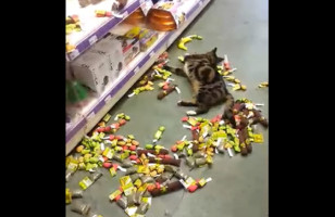 Watch This Cat Go On A Catnip Bender At The Pet Store