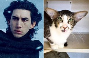 A Cat That Looks Like Kylo Ren & More Incredible Links