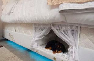 Check Out This People Bed With A Pet Bed Built Into It