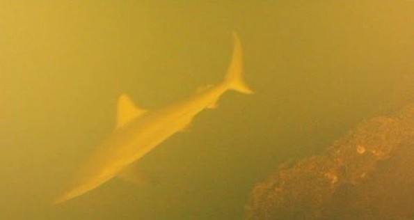 LOLWUT?: Scientists Discover Sharks Living In A Volcano