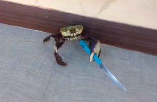 Be Careful, There's A Gangster Crab On The Loose & He's Bad AF
